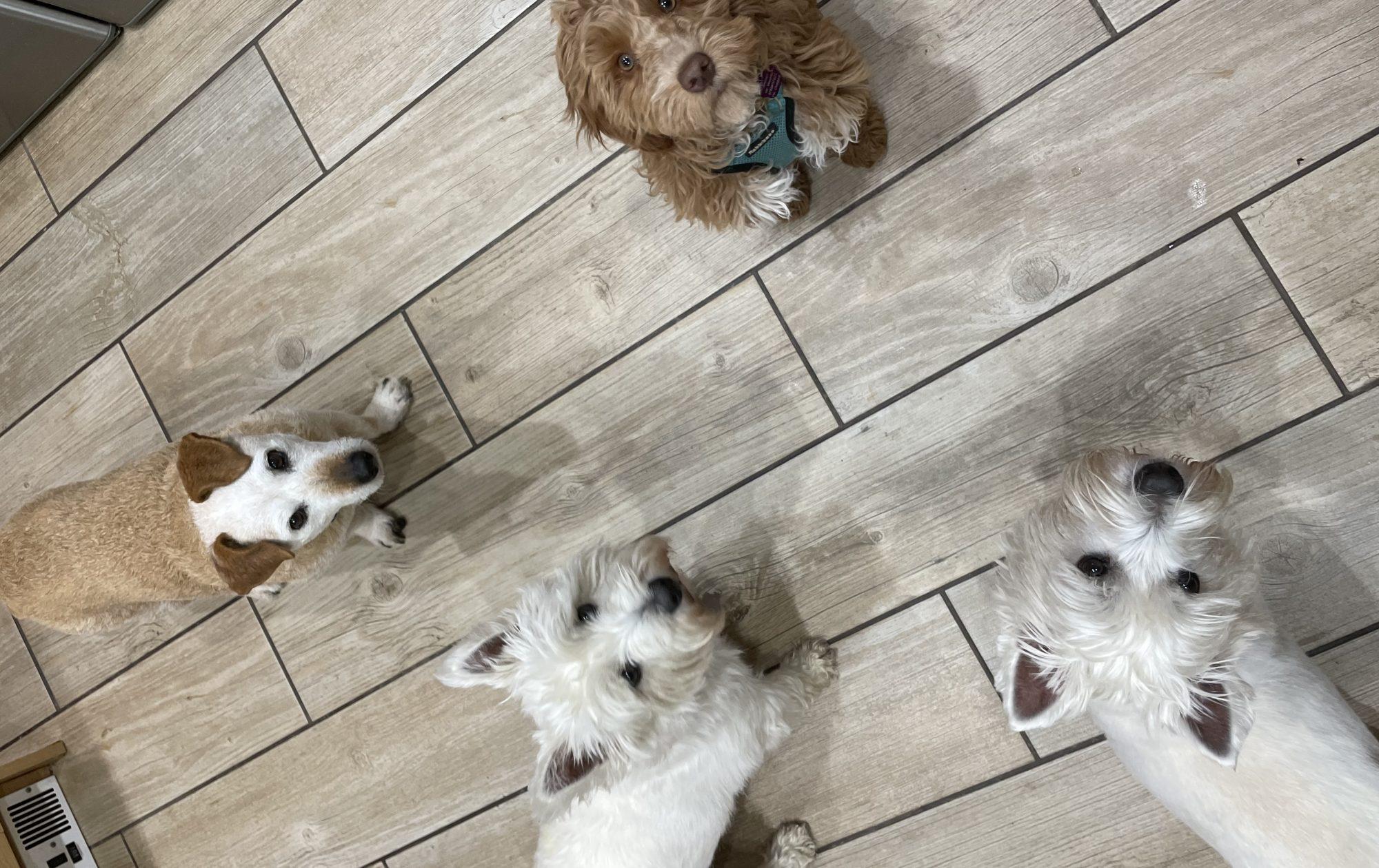 Divine Dog Care